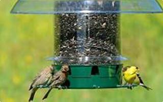 All Bird Feeders