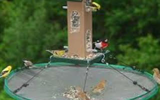 Birding Accessories