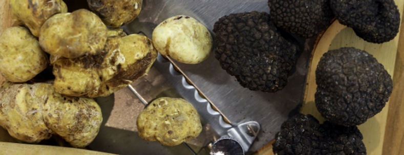 Differences Between Black and White Truffles