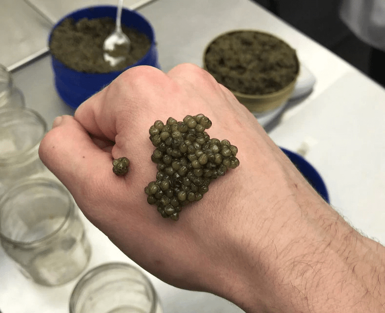 How To Eat Caviar? | Serve And Eat Caviar Like A Pro
