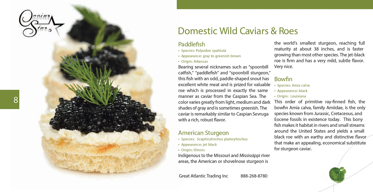 caviar-star-catalog-9.png