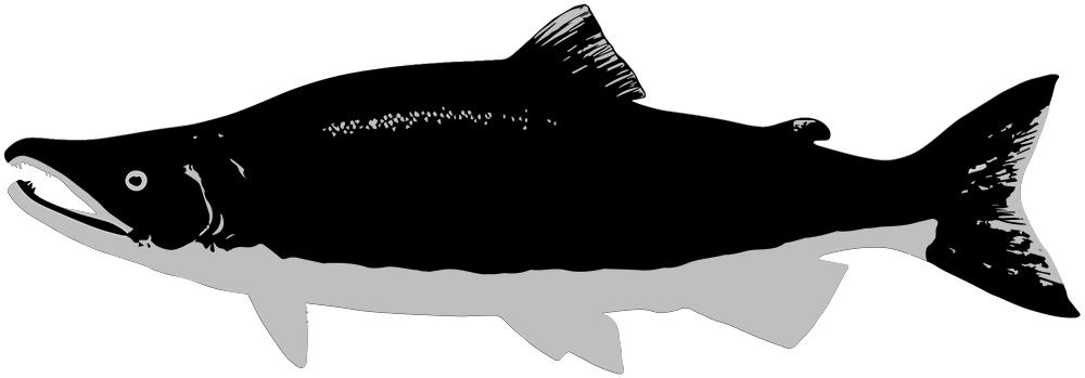 caviarstar-salmon-pic-black-2-med.jpg