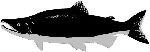 caviarstar-salmon-pic-black-2-small.jpg