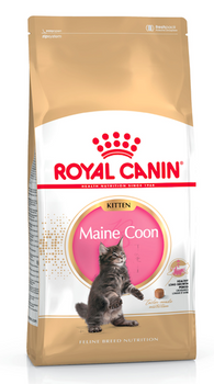 For Maine Coon Kittens from 4 months to 1 year old