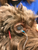 RM Electrode™ - Canine (Multi-Use)