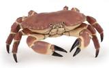 Crab - Papo