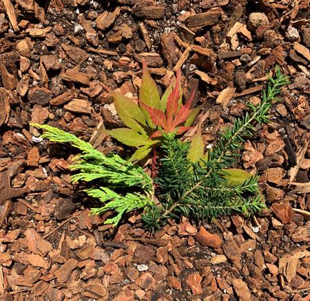 Kigi Mix for acid loving trees and shrubs