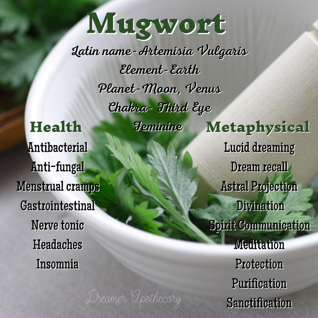 mugwort.png