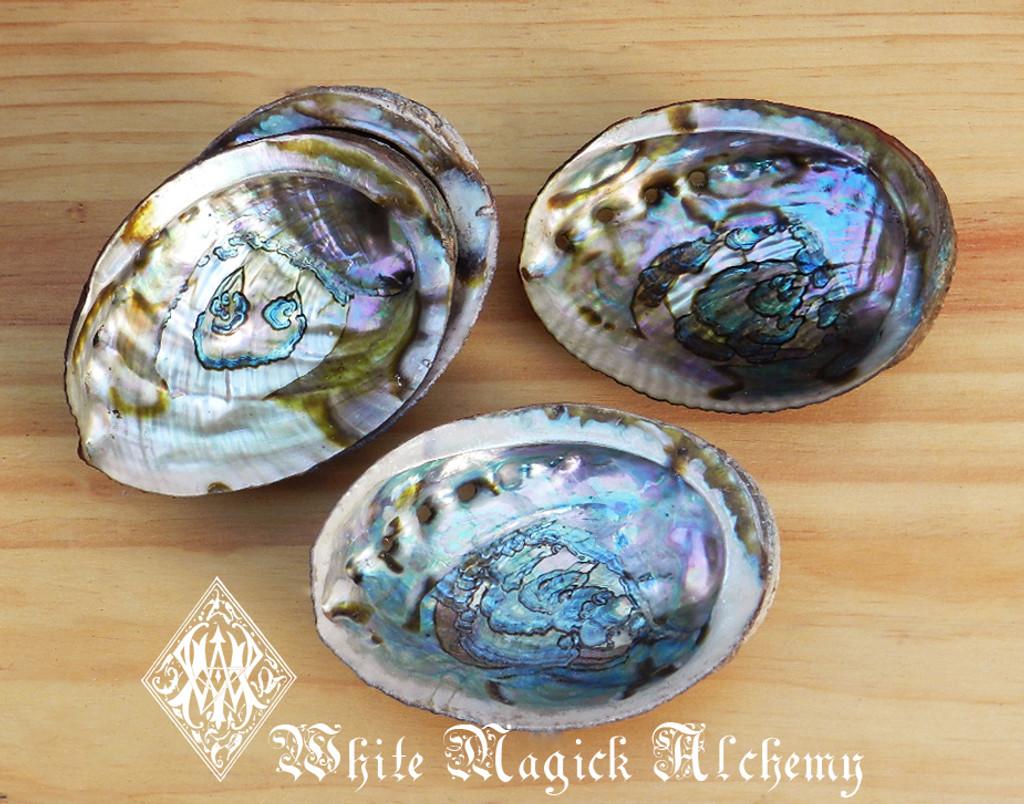 White Sage Wand and Abalone Shell Sacred Smudge Set