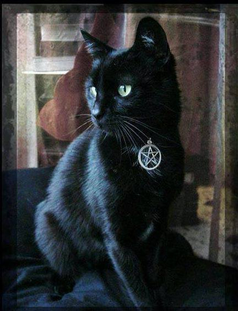 Witches Familiar Pentacle Cat Collar, Black, Blue, Orange, Purple or Red . Fully Adjustable