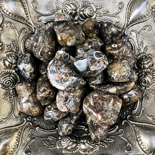 Turritella Agate Tumbled