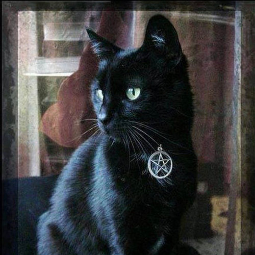 Witches Familiar Pentacle Cat Collar . Black, Blue, Orange, Purple or Red . Adjustable