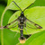 VivaTrap! Peach Tree Borer Moth Trap & Lure (2 Pack)