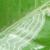 VivaTrap! Citrus Leaf Miner Trap + Lure (2 pack)