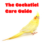What's Involved in Caring for A Cockatiel?