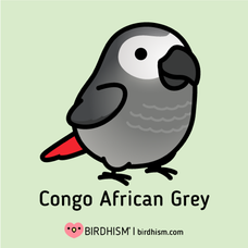 The African Grey Parrot: An Overview