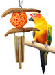 The 1524 from Bonka Bird Toys is a bird pleasing design that also looks great in any cage you decide to install it in. Small birds are going to love the natural texture.