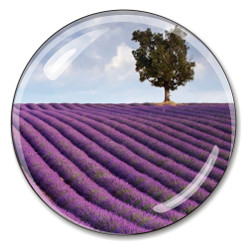 France's Provence Lavender Paperweight