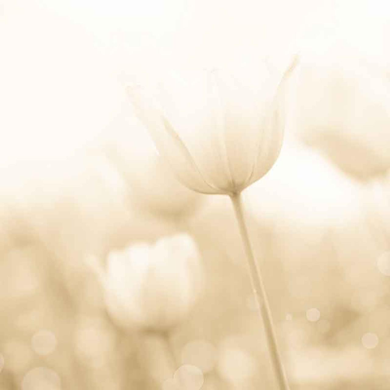 Soft Floral Bokeh