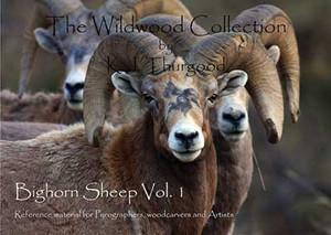 Bighorn Sheep Pattern Book, Vol. 1
