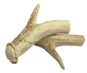ANTLER CANE HANDLE