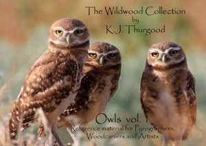 Owls Pattern Book, Vol. 1