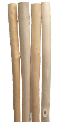 Aspen Walking Stick