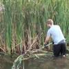 Aquatic Vegetation Groomer (AVG) | Cattail Cutter