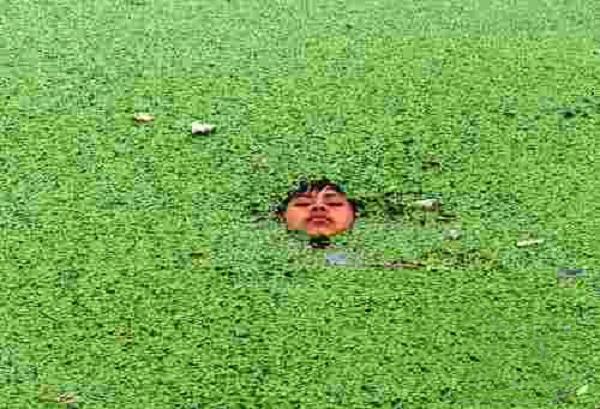 duckweed-lake-pond-control-aquatic-weed25.jpg