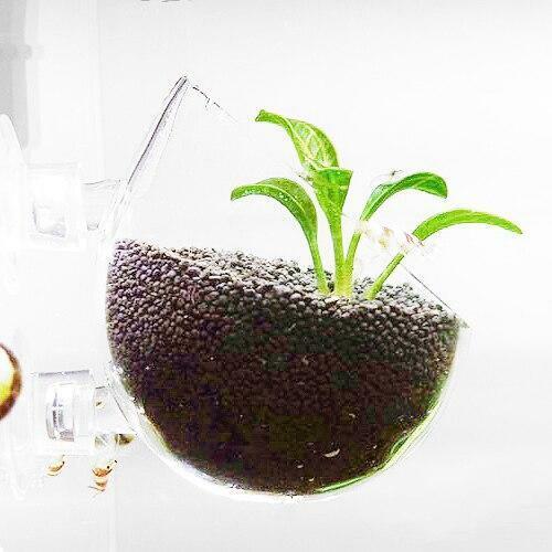 Glass Plant Pot