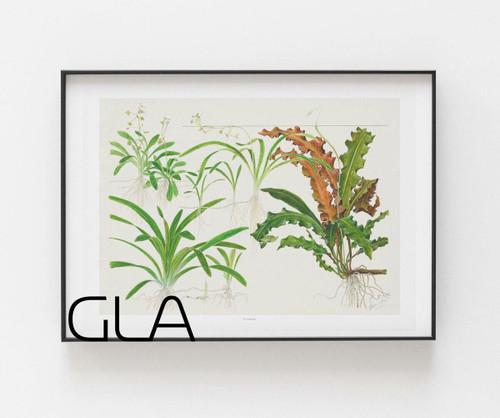 Tropica Watercolor Art Poster - Sagittaria
