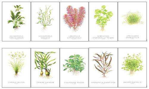Tropica Art Cards Set - Tropica Watercolor Art - 5X7 Inch
