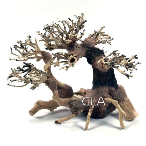 Multi Trunk Bonsai Driftwood