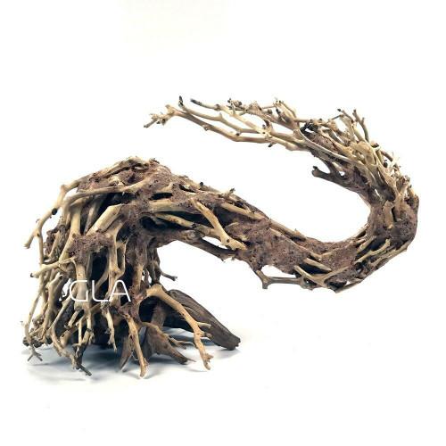 Dragons Tail Bonsai Driftwood