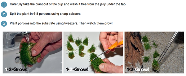 1-2-grow-tropica-instructions.png