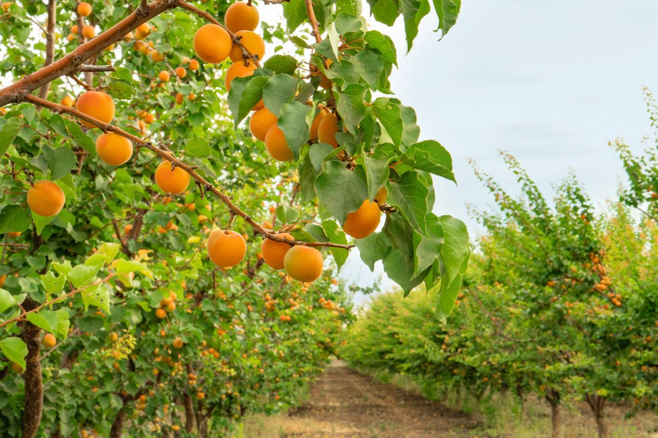 This Week At B & R Farms: Irrigation