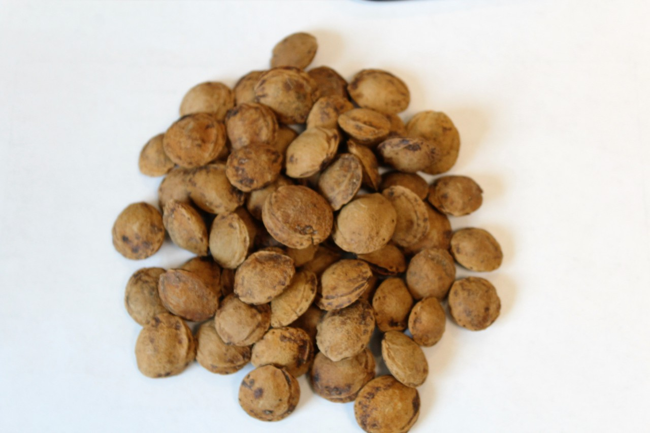 SALE! Sun-Dried Apricot Seeds, In Shell (usually $5.99)
