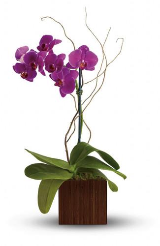 Bamboo Elegance