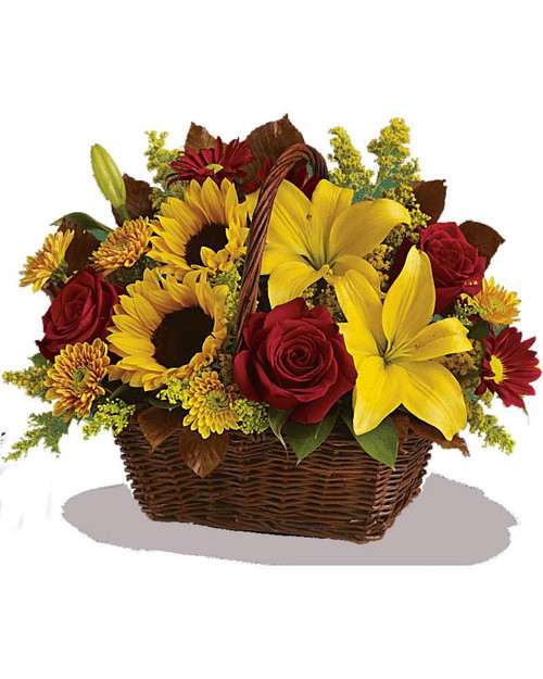Send warm autumn sunshine to a special friend or relative with this golden gift basket of flowers. Yellow lilies and sunflowers make everyone smile! A dark, handled basket presents bright fall bouquet of yellow asiatic lilies, yellow sunflowers, gold cushion mums, burgundy daisies, yellow solidaster, brown copper beech leaves and rich green salal.