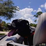 Bruce the Ragtop Dog