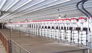 Swine barn upgrades to solve regulatory and efficiency needs