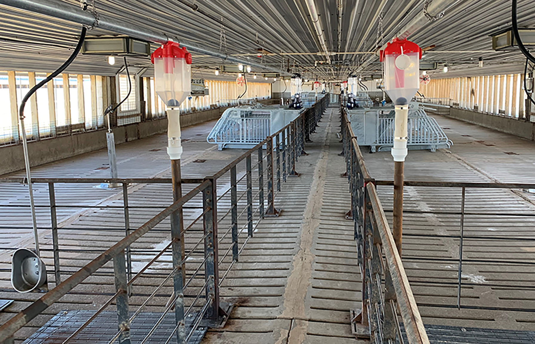 swine gestation barn remodel with group housing