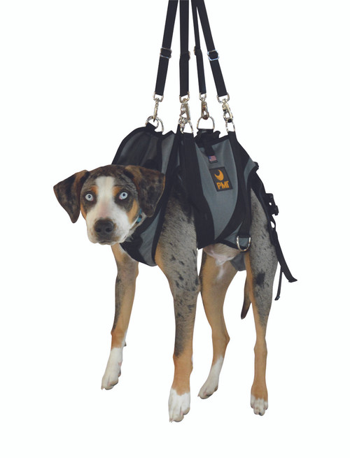 AnExK9 Harness