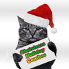 40pk Christmas Holiday Special Colors for Cats