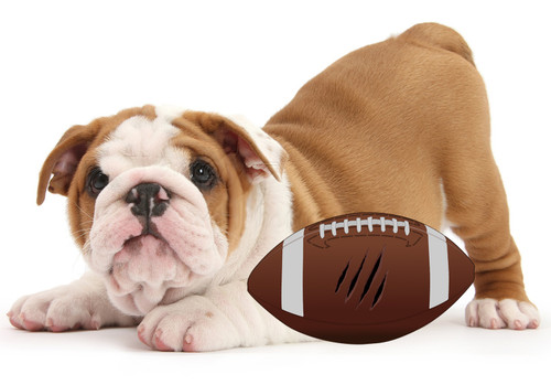 40pk DOG Game Day Football Combo Set Special