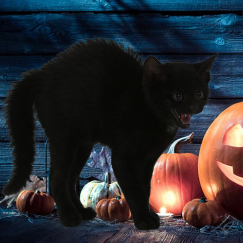 40pk Halloween Special Colors for Cats