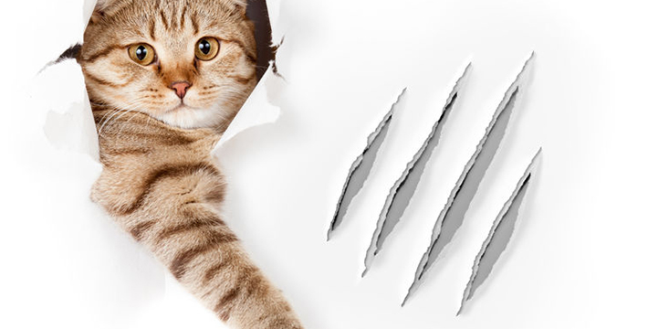Enhance the Relationship You have with Your Kitty with Purddy Paws