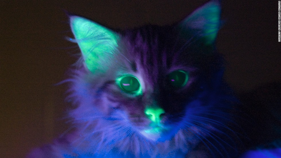 New Glow in the Dark Color of Purrdy Paws Soft Nail Caps !