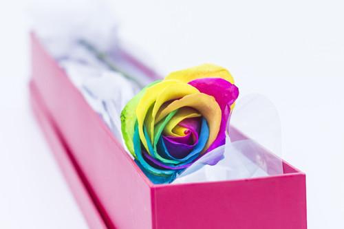 Single elegant rose - FREE DELIVERY