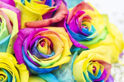 Half a dozen rainbow roses - FREE DELIVERY